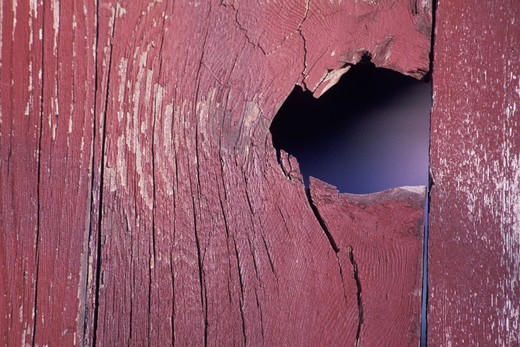 Stock Photo: 1626R-21048 Damaged wooden plank, full frame