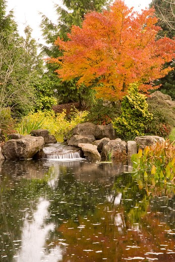 Autumn Tree and Pond : Stock Photo