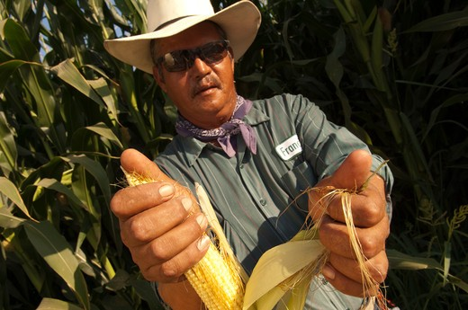 Stock Photo: 1626R-22570 Man Displaying Corn