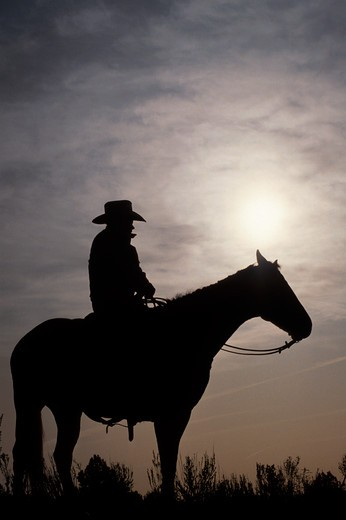 Cowboy at Sunset : Stock Photo