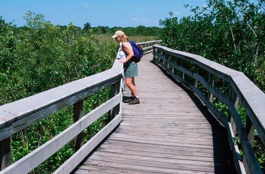 Florida Everglades : Stock Photo