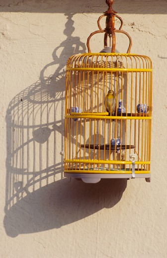 Stock Photo: 1626R-4224 Bird in Cage