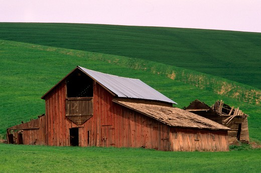 Dillapidated Barn in Field : Stock Photo
