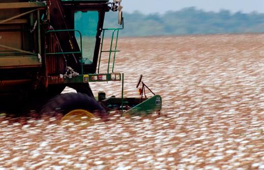 Stock Photo: 1626R-5473 Machine Working Cotton Field