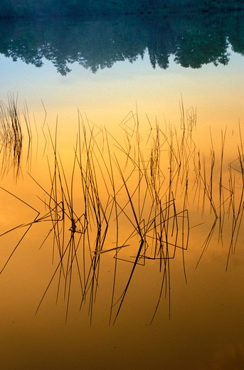 Stock Photo: 1626R-6330 Grass on Pond