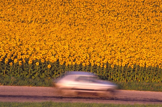 Driving Past a Field : Stock Photo