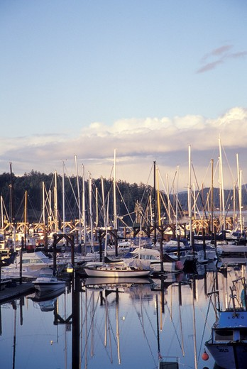 Stock Photo: 1626R-7277 Sailboats Docked in a Bay