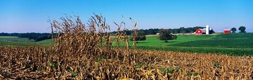 Cornfield and Farmland in Autumn : Stock Photo