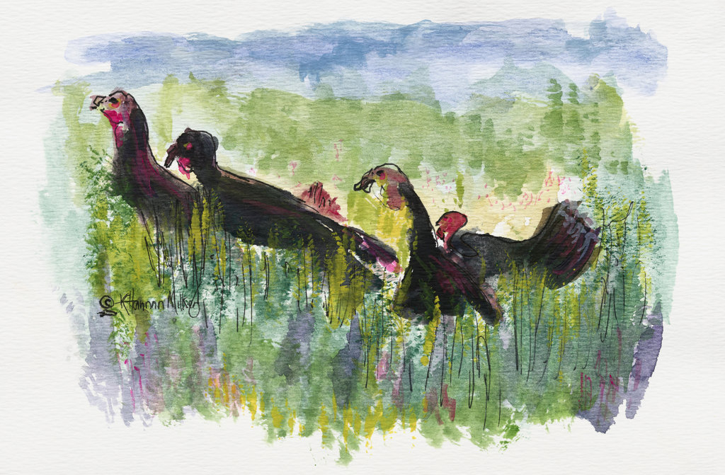 Cumberland Island Turkeys 2005 Kathryn Hannan Milkey (b.1932 American) Watercolor : Stock Photo