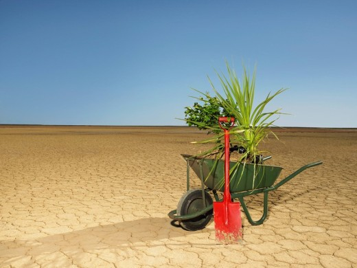 Wheelbarrow full of plants next to spade in desert : Stock Photo