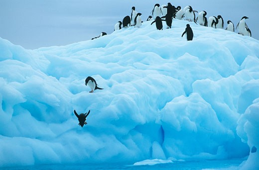 Penguins on iceberg : Stock Photo