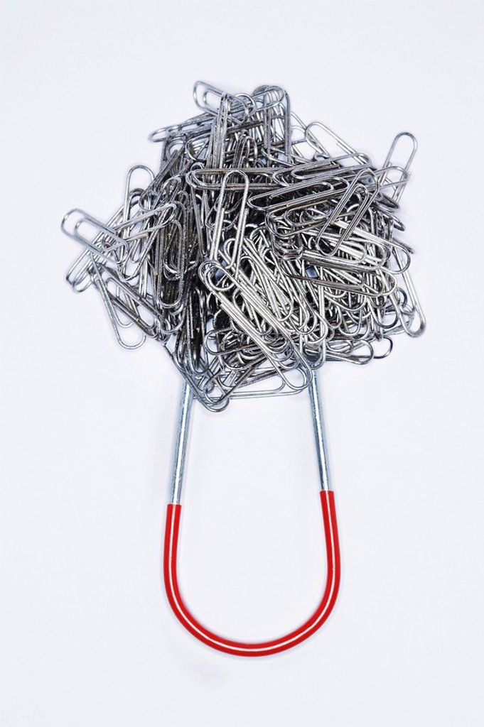 Clump of paperclips attached to horseshoe magnet : Stock Photo