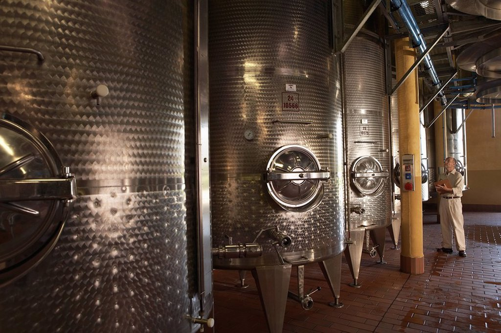 Man examination wine vats : Stock Photo