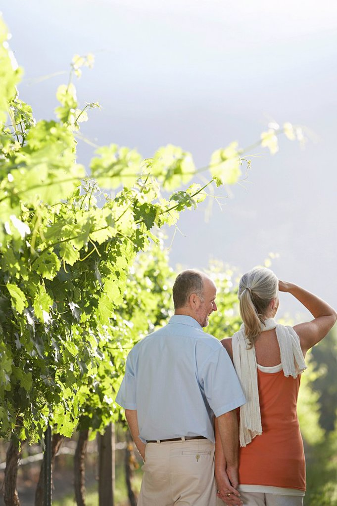 Stock Photo: 1654R-11733 Mature couple at the vineyard back view