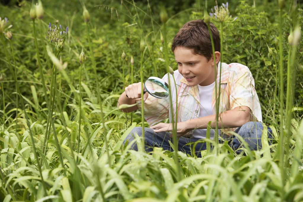 Boy Looking at Insects with Magnifying Glass : Stock Photo