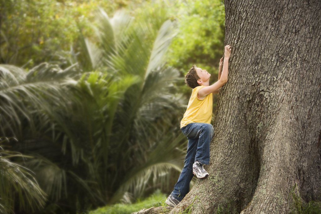 Boy Climbing Large Tree : Stock Photo