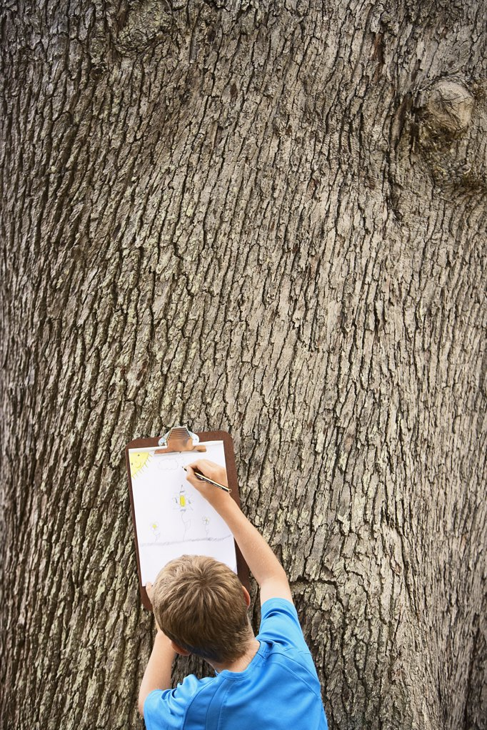 Boy Drawing by Tree : Stock Photo