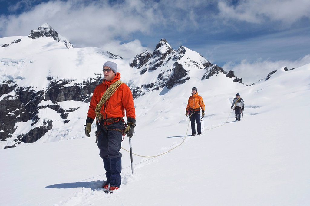 Three hikers joined by safety line in snowy mountains : Stock Photo