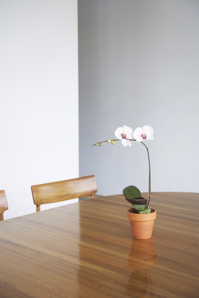 Stock Photo: 1654R-17700 Potted flower on table