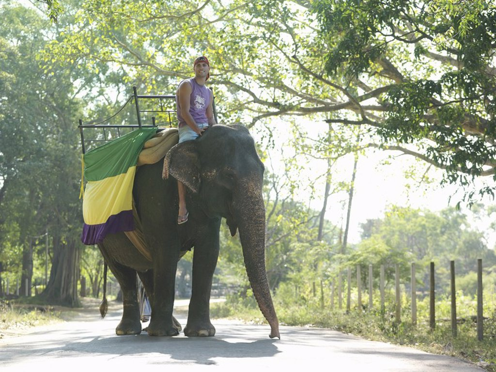 Stock Photo: 1654R-18808 Young man riding elephant on road in trees
