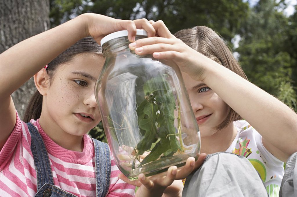 Two girls 7_9 examining stick insects in jar outdoors : Stock Photo