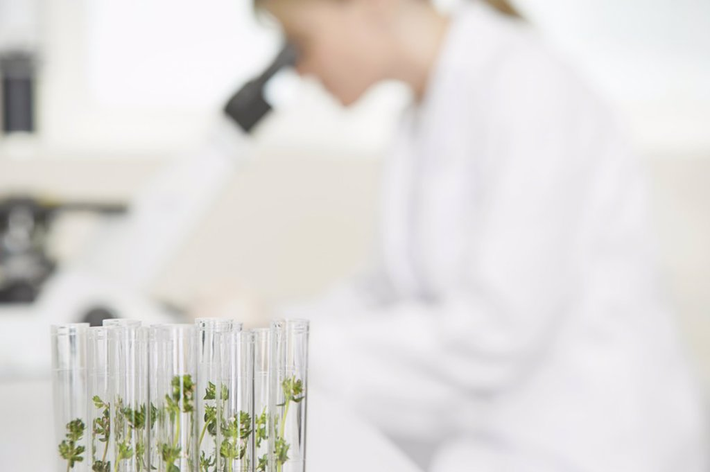 Scientist using microscope in laboratory focus on plants in test tubes in foreground : Stock Photo