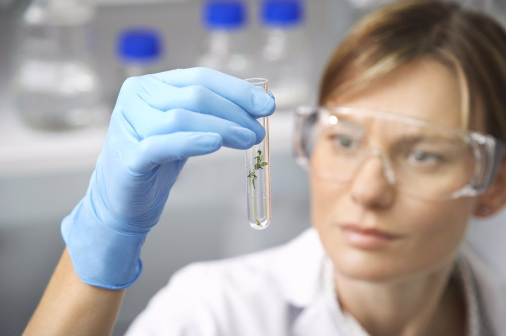 Stock Photo: 1654R-20032 Scientist examining plant in test tube in laboratory focus on test tube