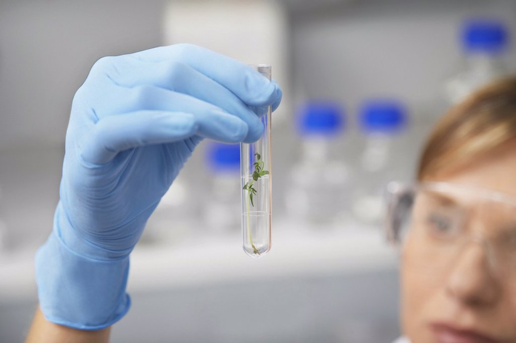 Scientist examining plant in test tube in laboratory focus on hand and test tube : Stock Photo