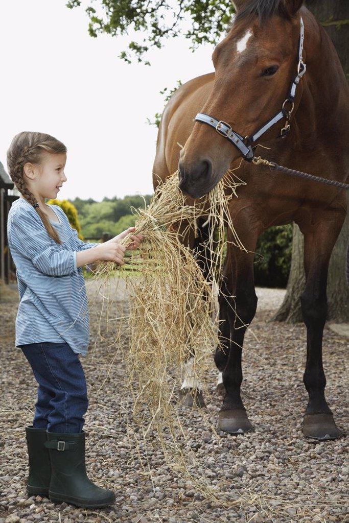 Stock Photo: 1654R-20675 Girl 5_6 feeding horse hay outdoors