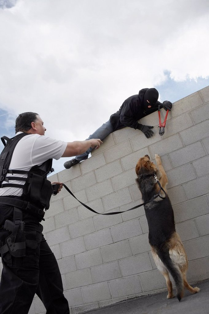 Stock Photo: 1654R-27876 Security guard with dog catching thief