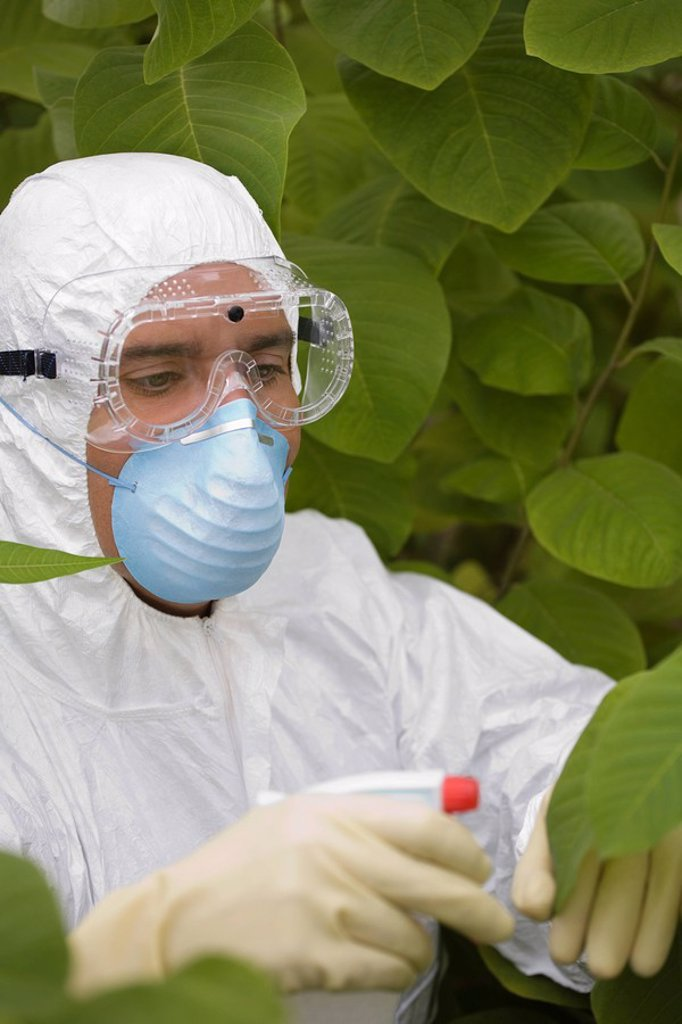 Worker in protective mask and suit spraying plants : Stock Photo