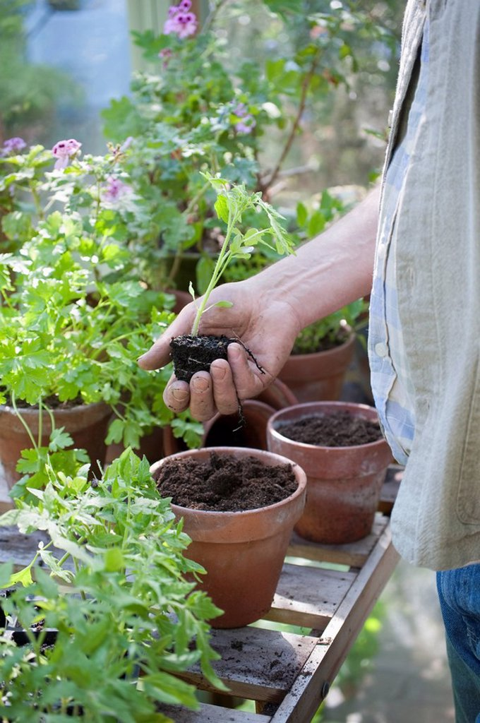 Gardener works in potting shed : Stock Photo