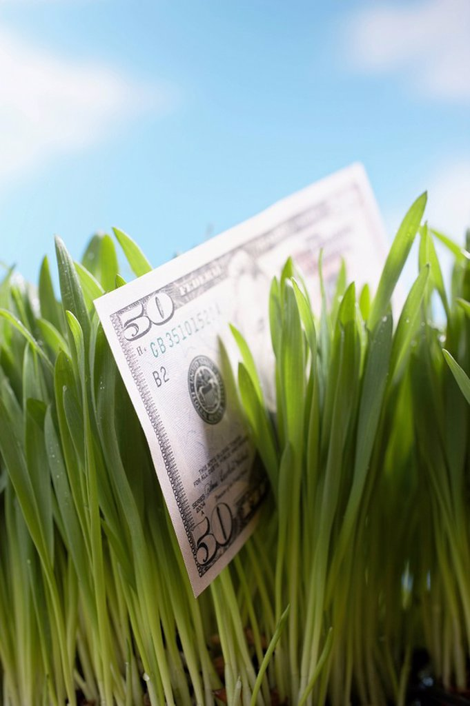 Fifty_dollar bill in grass close_up : Stock Photo