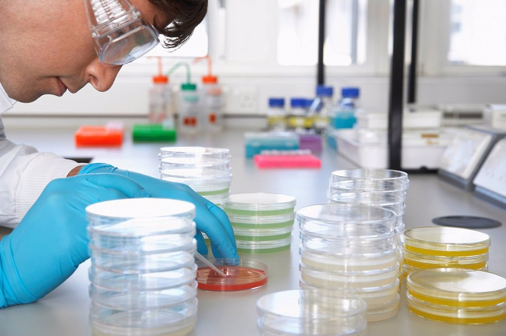 Male lab worker with petri dishes : Stock Photo