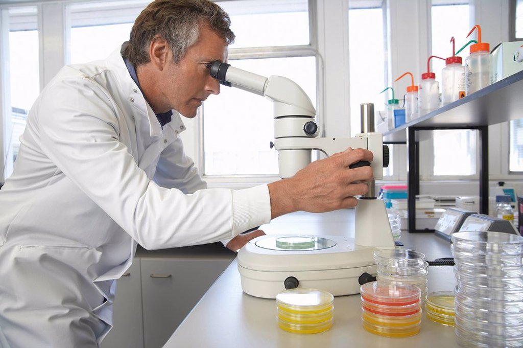 Stock Photo: 1654R-9034 Male lab worker adjusting microscope to examine petri dish