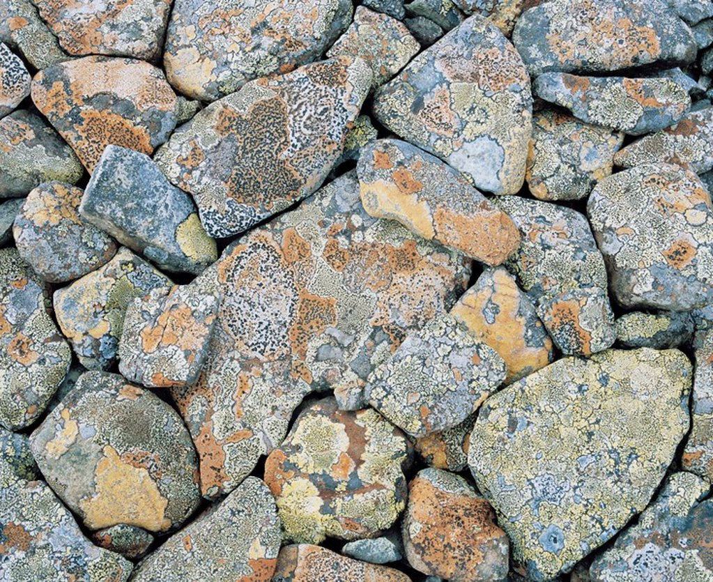 Stock Photo: 1654R-9157 Moss covered rocks