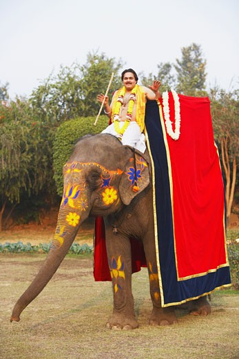 Portrait of a priest riding an elephant : Stock Photo