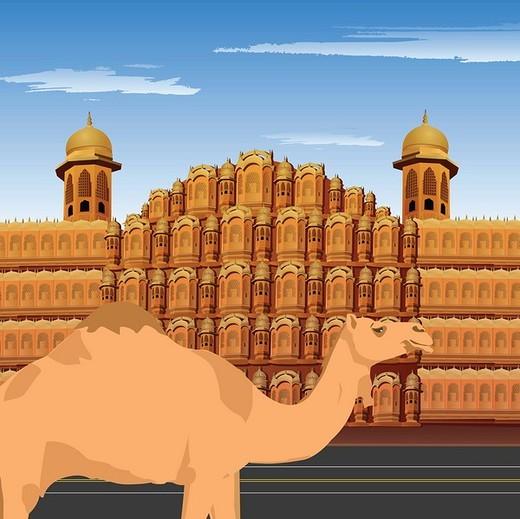 Stock Photo: 1657R-34855 Camel standing in front of palace, Hawa Mahal, Jaipur, Rajasthan, India