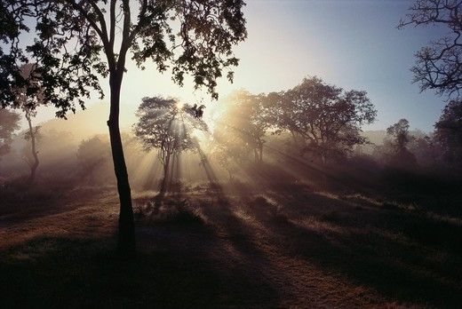 Sunbeams radiating through trees, Ranganthittu Bird Sanctuary, Mandya, Karnataka, India : Stock Photo