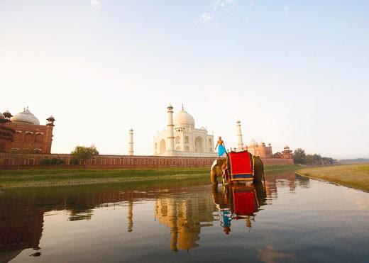 Stock Photo: 1657R-8192 Young man standing on an elephant, Taj Mahal, Agra, Uttar Pradesh, India