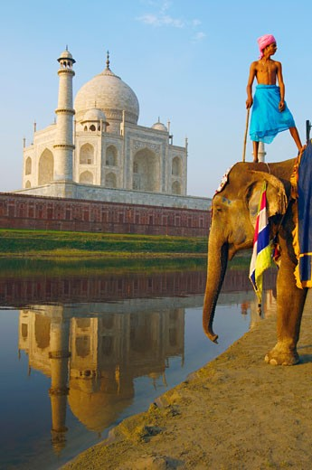 Low angle view of an elephant handler standing on an elephant, Taj Mahal, Agra, Uttar Pradesh, India : Stock Photo