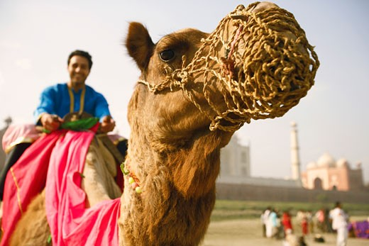 Close-up of a young man riding a camel : Stock Photo