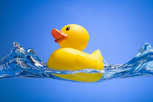 Rubber duck : Stock Photo
