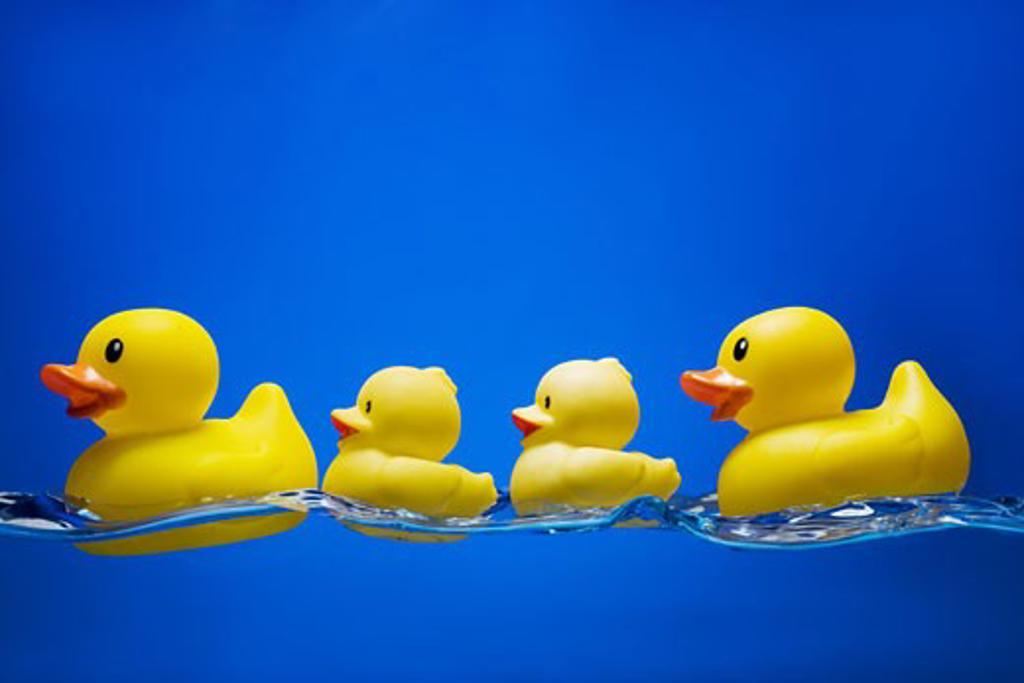 Rubber ducks : Stock Photo