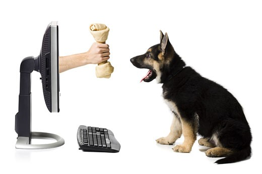 Stock Photo: 1660R-16492 Hand with bone in monitor with German shepherd puppy