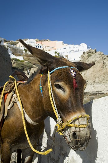 Decorated donkey near village : Stock Photo