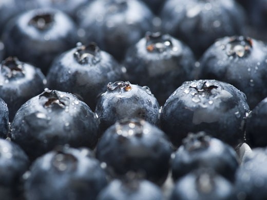 Stock Photo: 1660R-27466 Close-up of blueberries