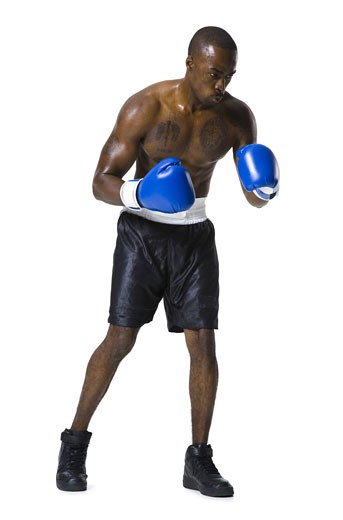 Boxer : Stock Photo