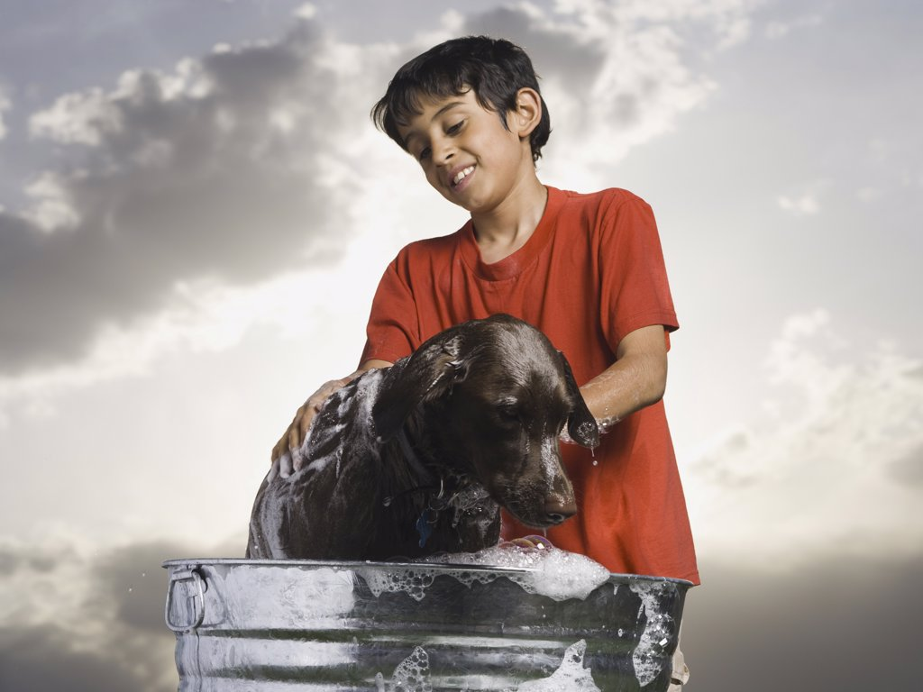 Stock Photo: 1660R-34450 Boy bathing dog outdoors on cloudy day