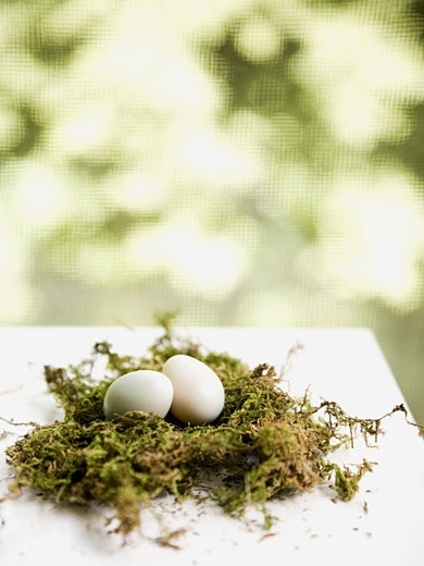 Stock Photo: 1660R-43995 eggs in a nest